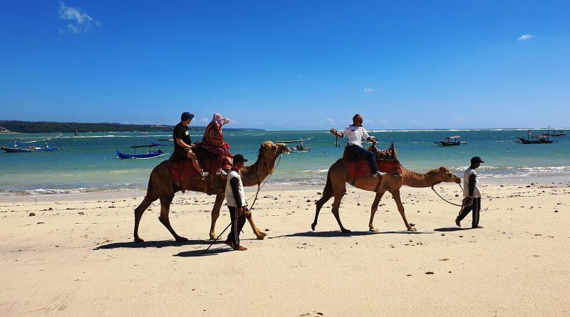 발리 자유여투어 – 발리 낙타 프로그램(Bali Camel Adventure)